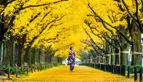 A Handy Guide For Travelers To Explore Tokyo In November